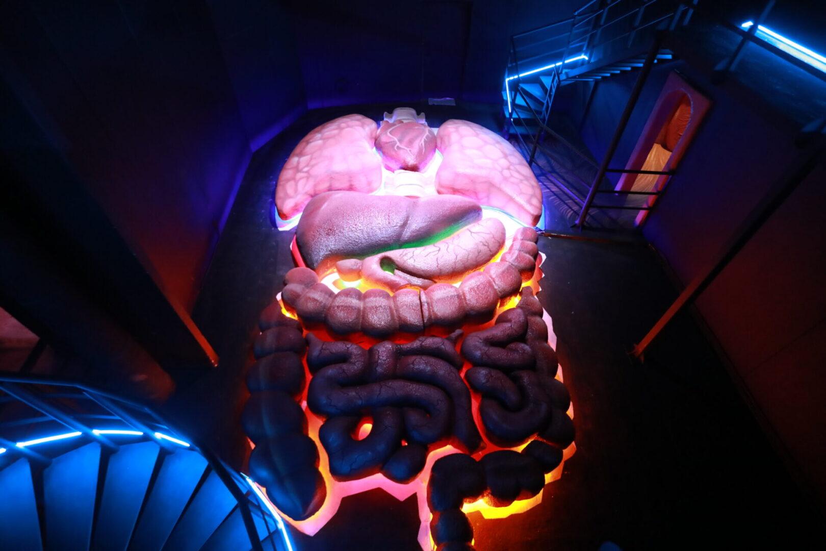 Художественное оформление аттракциона «Внутри человека» в парке развлечений «Galaxy» ораганы