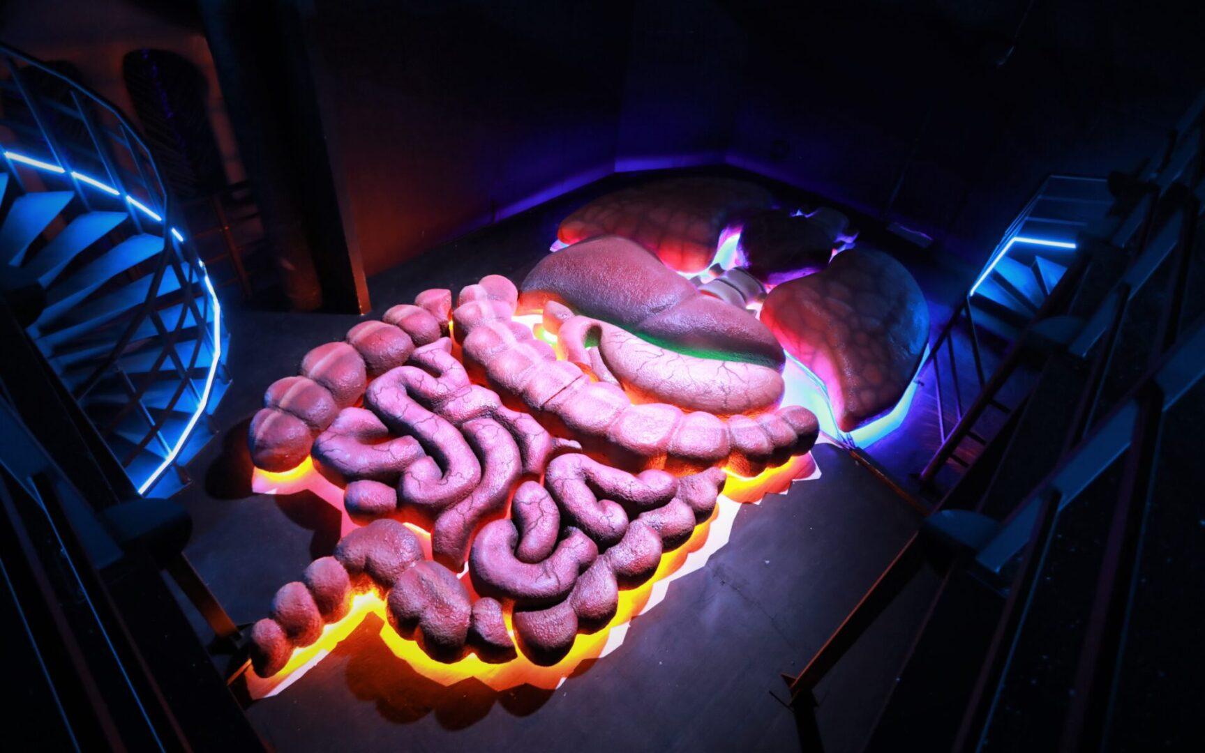Художественное оформление аттракциона «Внутри человека» в парке развлечений «Galaxy» органы вид сбоку